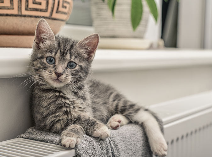 killing der sidder på gasfyret radiator